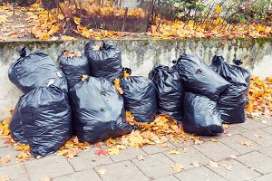 Plastic garbage bags full of leaves