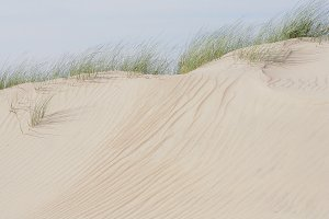 Sand dunes and green grass