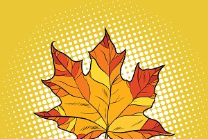 Red maple leaf in autumn