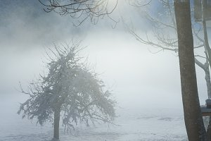 Winter misty country view.