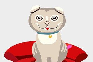 Scottish fold kitten on red sofa