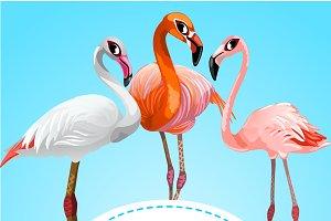 Three beautiful flamingos