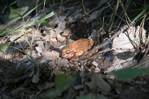 Frog in forest