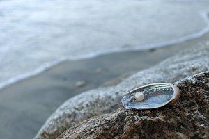 Pearl Oyster On Coastline