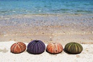 Row Of Sea Urchins On Coastline