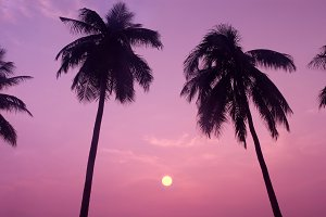 Coconut Trees during Sunset