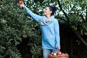 Woman farmer picking apples