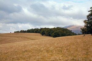 Autumn Carpathian Mountains