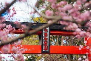 Japanese Garden Cherry Blossom