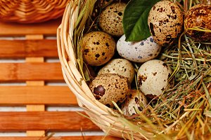 Fresh quail eggs in basket