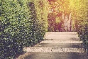 Garden walk way