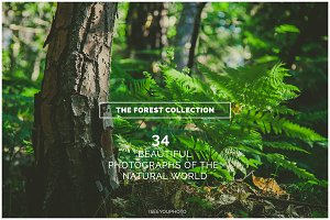 THE FOREST COLLECTION iseeyouphoto