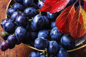 Autumn juicy grapes