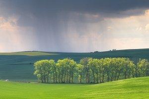 Rain in field