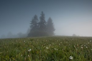 foggy field