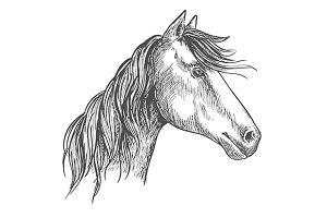 White horse with wavy mane