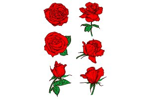 Red roses buds icons