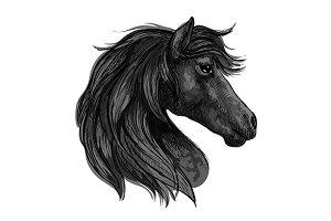 Raven horse head profile