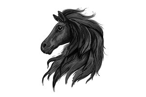 Black noble horse profile