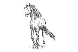 Running white horse sketch