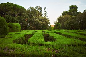 Green labyrinth in a park