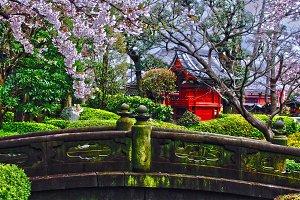 Blossom in a Japanese garden