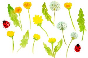 Watercolor Dandelions