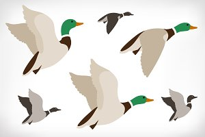Set of flying ducks. Duck hunting.