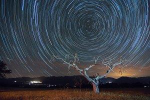 star trails tree
