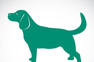Vector image of a dog labrador.