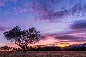 tree sunset II
