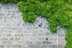 Stone wall with partial planting