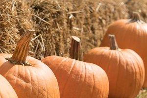 Pumpkin patch XS
