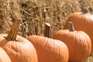 Pumpkin patch S