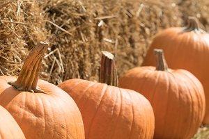 Pumpkin patch M