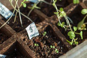 Thyme to Start Growing