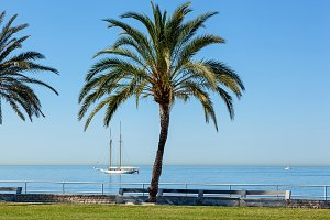 Palm on Seafront