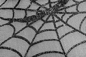 Spiderweb. Background of Halloween