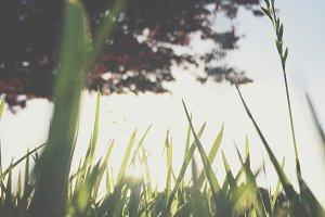 Grass Lands III
