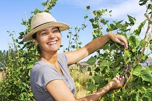 woman picking beans
