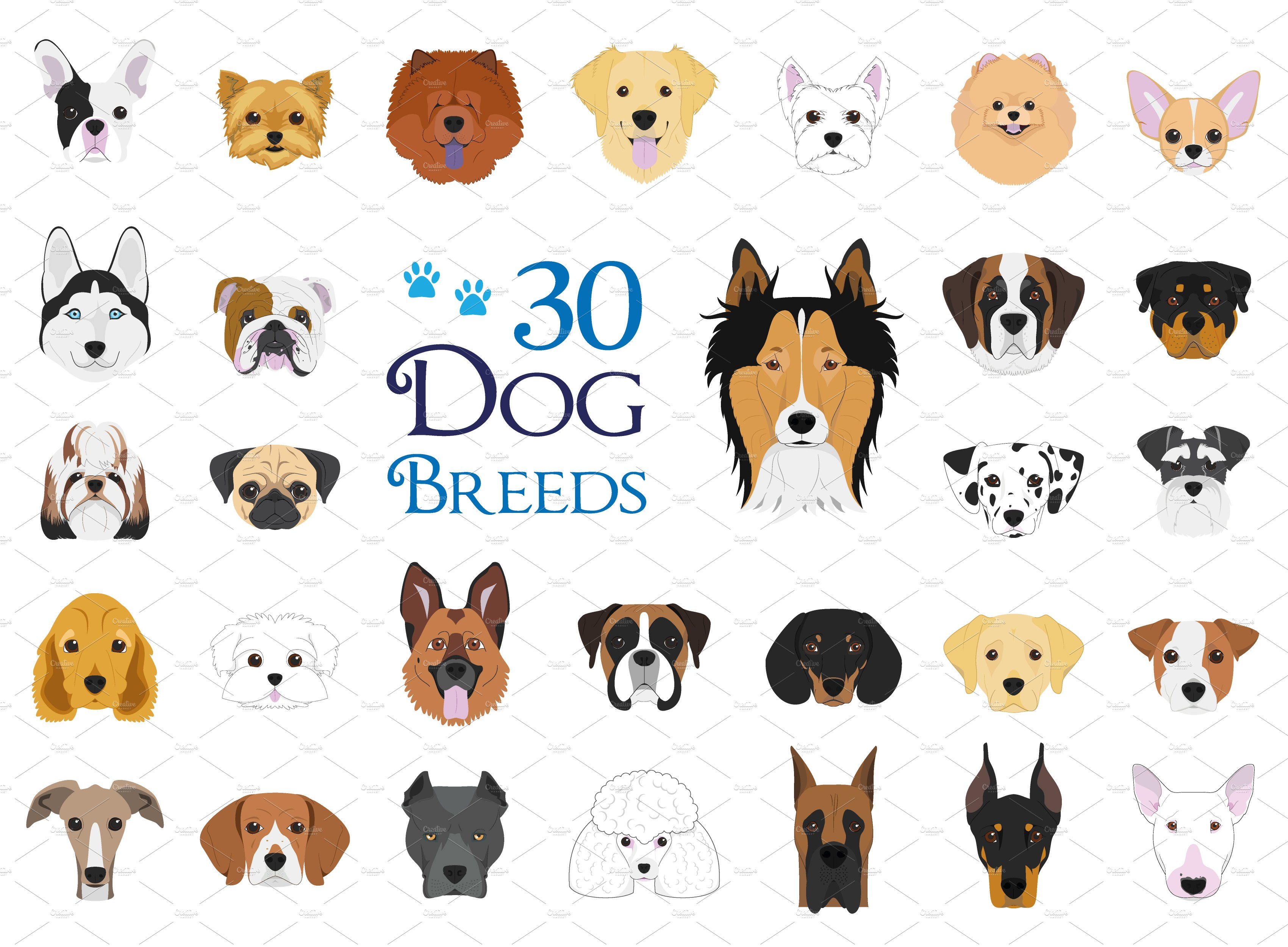 30x dog breeds vector collection illustrations for Different types of puppies breeds