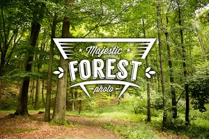 Majestic forest photo set
