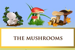 Collection of forest mushrooms