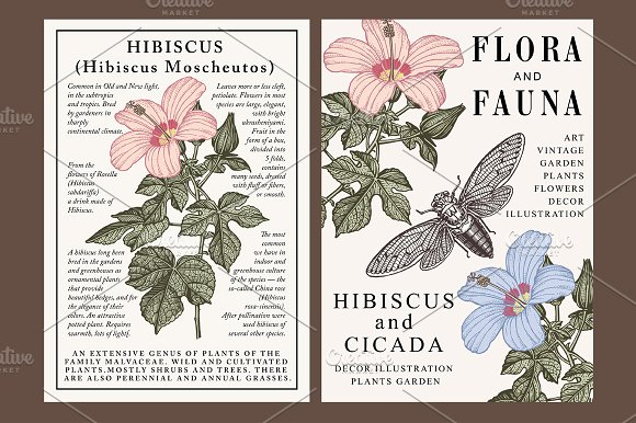 Set Flowers Hibiscus Cicada Card