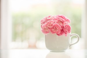 Sweet carnation in white cup