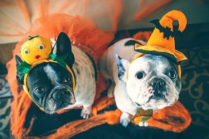 Dogs with halloween costume
