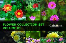 Flower Collection Set Vol.01