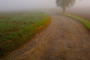 path and tree