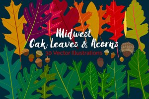 Midwest Oak Leaves and Acorns