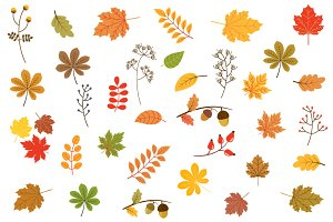 Autumn leaves clipart set